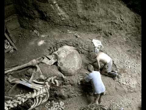 Skelette Von Riesen